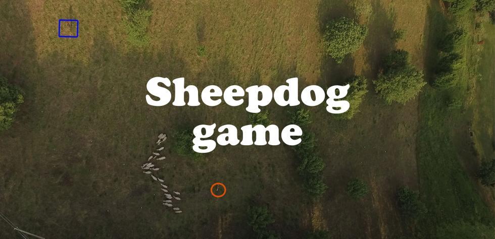 ripresa nadirale con phantom 3 pro di un allenamento di Sheepdog in Valdobbiadene